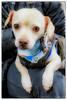 2014-02-11 RHR : Achilles, Berry, Charlie, Laverne, Patch, & Scout. www.ruffhouserescue.com