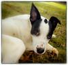 p1110036_KathyLeistner_090314_Snapseed