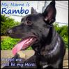 p1110626_KathyLeistner_RAMBO_090714Rambo_Snapseed