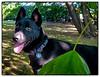 p1110611_KathyLeistner_RAMBO_090714_Snapseed