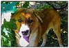 p1110686_KathyLeistner_Bingo_090714_Snapseed