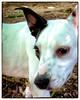 p1120481KathyLeistner_091514_Snapseed