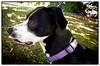p1120815KathyLeistner_091714ED_Snapseed