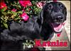 p1120928KathyLeistner_091714_RUE_Edit_SnapseedKatniss