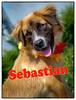 dsc_1575KathyLeistner_091914ED_SnapseedSebastian