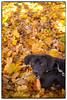 P1150803_KLeistner_Snapseed