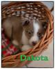 _KPL7352-1_KLeistner_Dakota_Snapseedtitle