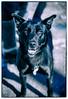 _KPL9150_KLeistner__Snapseed copy_KLeistner_bluedog