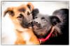 2015-02-08 RHR : Jill's Puppies. www.ruffhouserescue.com