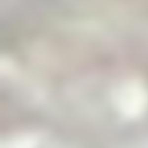 """""""Detail 5366 B"""""""