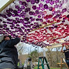 Volunteers hang recycled bottles from a structure at the park on Memorial Drive in Ashburnham. Volunteers and local Girl Scouts gathered on Saturday to create a sculpture in memory of 6-year-old Kate Arpano who died from a rare brain cancer in January. SENTINEL & ENTERPRISE / Ashley Green