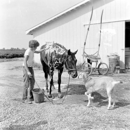 A boy washes down a horse who seems to be making friends with a goat during the 1975 Effingham County Fair. Do you recognize the boy? If so, share the information under the photo online at the Effingham Daily News Facebook page.