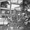 A man is shown in a greenhouse with thriving plants. The photo was taken in August 1970. Do you know the man? If so, share the information under the photo on the Effingham Daily News Facebook page.