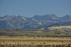 Hay bales, Wind River Range, Pinedale, WY (5)