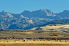 Hay bales, Wind River Range, Pinedale, WY (10)