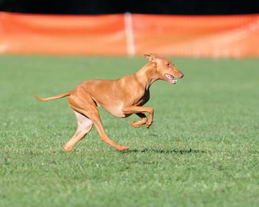 Bayshore Companion Dog Club 9/27/2014