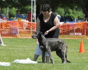 Bayshore Dog Training Club