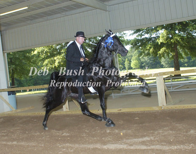CLASS 16  - 3 YR OLD OPEN