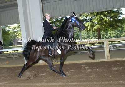 CLASS 5  WALKING PONIES ADULT AM SPECIALTY