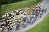 Two species merge into one peloton on the Ponte Arche...