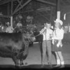 A young girl hands the trophy to a young man and his cow during a fair. Do you recognize the people, or do you know where or when the photo was taken? If so, share the information under the photo online at the Effingham Daily News Facebook page.