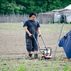 Sunny Hang weeds his crops at World Farmers in Lancaster. SENTINEL & ENTERPRISE / Ashley Green