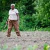 Josephine Kihu, from Kenya, works on her crops at World Farmers in Lancaster. SENTINEL & ENTERPRISE / Ashley Green