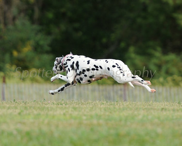 Lehigh Valley Coursing Club 8-16-2014