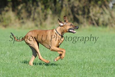 Lower Camden Dog Training Club Oct 25-26