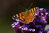 Butterfly6928(8x12)