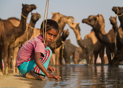 Camel boy in Pushkar