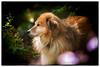_kpl4268KathyLeistner_102614_Snapseed