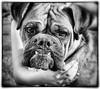 _DSC1818_KLeistner_FIONA_Snapseed_Snapseed2