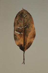 """""""Leaf 1110"""""""