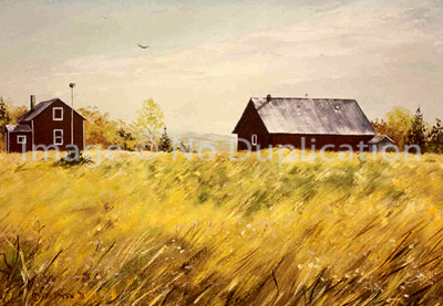 "1976:  ""Puutio's Place in Fall"", Approx 18x24 Acrylic  I'm sure I did this painting from photos I would have taken of the property in the 1970's; as I don't recall any photos like this from very, very old photos in our family album going back to the 'pioneer' stage of the farms near my grandparents' farm in the Angora, Minnesota, area.  I remember old Mr. Puutio, when he died and a funeral.  There is a photo in the album of him and from that I can vividly bring his image into my mind even today.  The Puutio property was across the road and down a bit from the Maki property."
