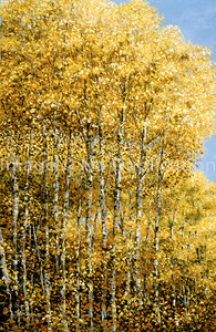 """1993:  """"North Shore Birches"""", 24x36 Oil Painting-Knife Technique on Canvas  Typical birch forestation along the Lake and inland from its shore."""