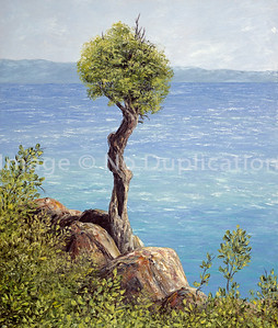 """1992:  """"The Witch Tree"""", 24x30 Oil Painting-Knife Technique on Canvas  This tree on the North Shore of Lake Superior, near Grand Portage, is revered by the Native American population; as it appears to have grown out of rocks.   It is estimated at over 300 years old; and is now protected on Native land, no longer accessible to the tourism public without justifiable reason for permission."""