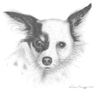 2004:  Chihuahua