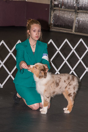 July 2015 Lakeland Dog Show