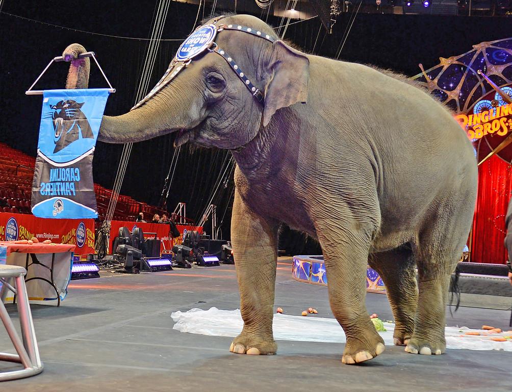 Elephant Brunch