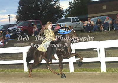 CLASS 14     4 YR OLD AMATEUR SPECIALTY