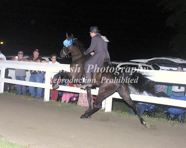 CLASS 23  - 4 YR OLD OPEN SPECIALTY