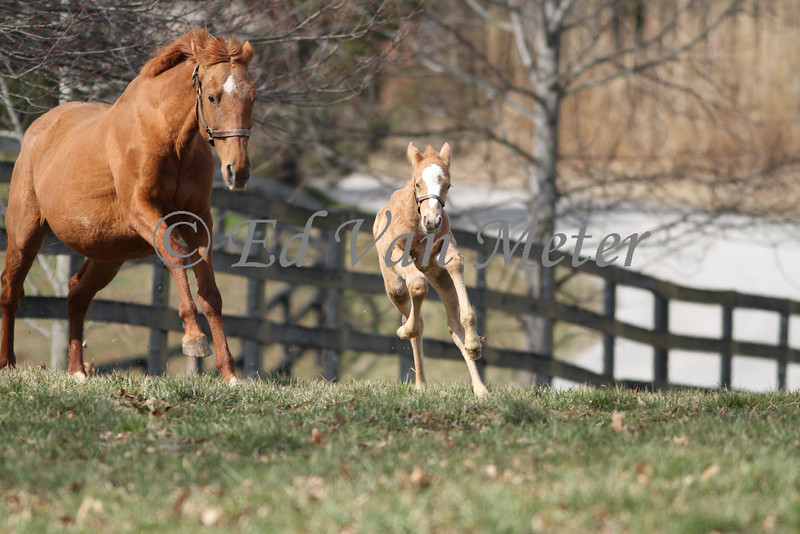Colt, 7 days old, Sprite and Harley (Mystic Blue Eyes) 03.14.2013