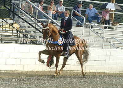 2014  -TAZEWELL COUNTY  38TH  ANNUAL  SHRINERS WALKING HORSE CLASSIC