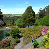 The magnificent Emu Valley rhododendron gardens