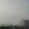 Smog Pea Soup!