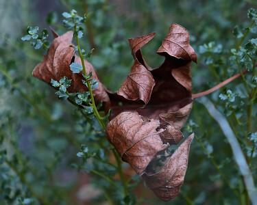 NaturePhoto_150123_8x10_SP_1