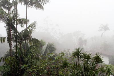 Cloud Forest at Villa Blanca