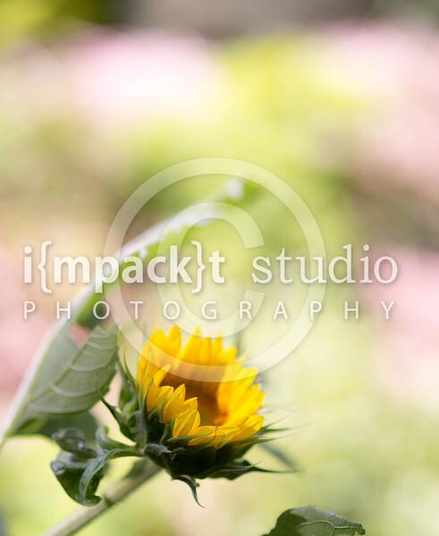 Flowers | Plants