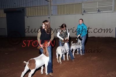 Odessa2015-1F Goats-010